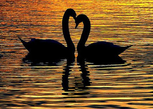 Какой он, аромат любви